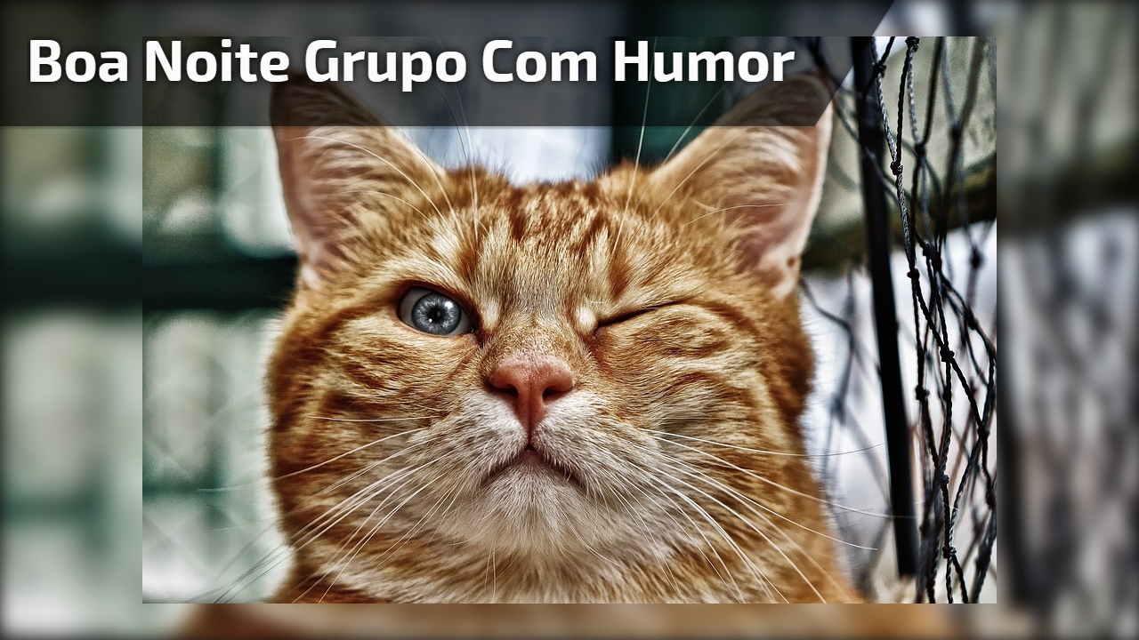 Boa noite grupo com humor