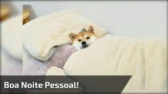 Boa Noite Pessoa, Tenham Todos Bom Descanso!