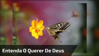 Linda Mensagem Gospel De Boa Noite, Com Muitas Flores E Borboletas!
