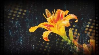 Mensagem Boa Noite Romântica Com Flores Para Você Enviar Para Seu Amor!