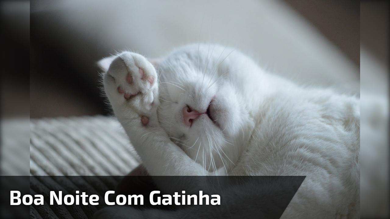 Boa noite com gatinha
