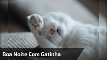 Mensagem De Boa Noite Com Gatinha Para Amigo E Amiga Do Whatsapp!