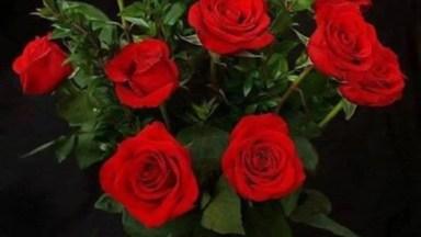 Uma Linda Noite Para Você Com Belas Flores!