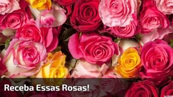 Vídeo Com Flores Para Desejar Boa Noite Para Amigos E Amigas!