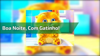 Vídeo Com Gatinho Dando Boa Noite Meu Amor, Para Whatsapp!