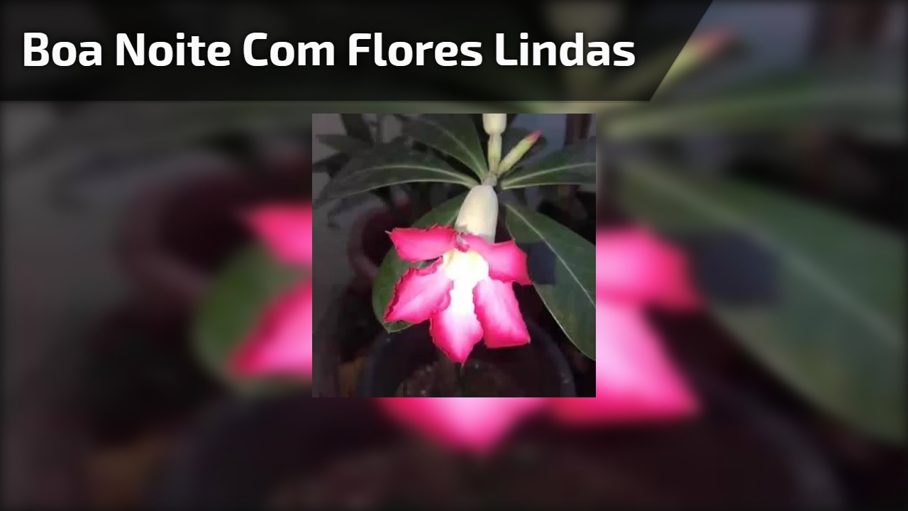 Vídeo De Boa Noite Com Muitas Flores Lindas Para Colorir A
