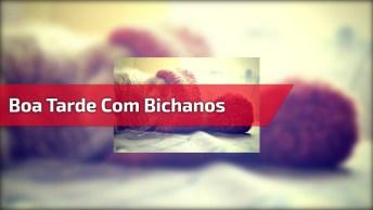 Boa Tarde Com Bichanos, Para Compartilhar Com Amigos Do Facebook!