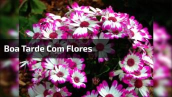 Boa Tarde Com Flores, Que A Felicidade Vá Em Direção Do Infinito!