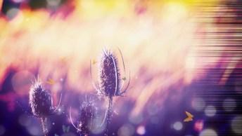 Boa Tarde De Sábado - A Paz Interior É O Único Caminho Para A Felicidade Plena!