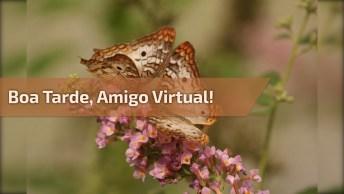 Boa Tarde Para Amigo Virtual, Um Lido Vídeo Para Compartilhar Com O Amigo.