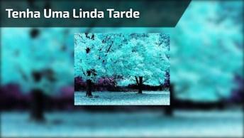 Linda Tarde A Você, Que Curte Cada Segundo Da Vida!