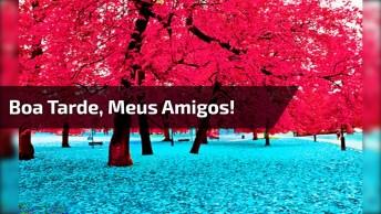 Vídeo Com Mensagem De Boa Tarde Para Compartilhar Com Amigos E Amigas!