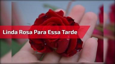 Vídeo De Boa Tarde Com Mensagens De Orações Para Seus Amigos Do Facebook!