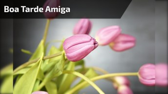 Vídeo De Boa Tarde Para Amiga, Perfeito Para Compartilhar No Facebook!