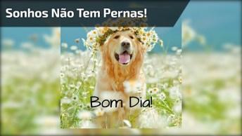 Bom Dia Especial, Com Imagens E Mensagens Lindas, Confira!