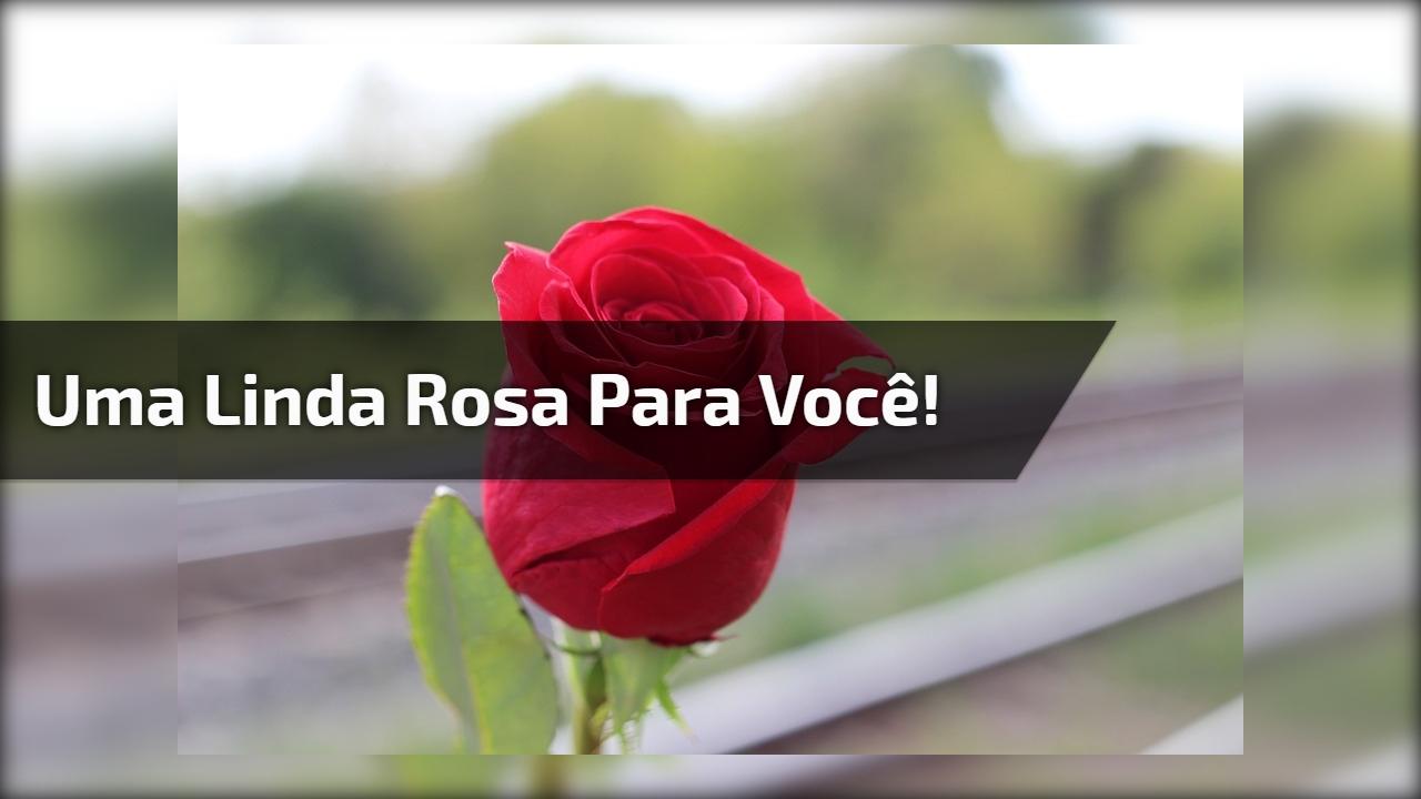 Uma linda rosa para você!