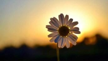 Bom Dia Quarta-Feira, Faça Da Vida O Seu Doce Predileto E Seja Feliz!