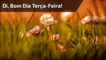 Bom Dia Terça-Feira, Envie Energia Positiva Para Seus Amigos Do Whatsapp!