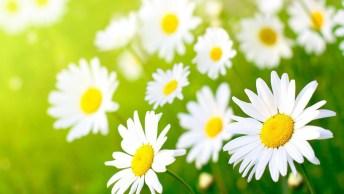 Bom Dia Terça-Feira! Que Ao Se Levanta Todas Suas Energias Sejam Recarregadas!