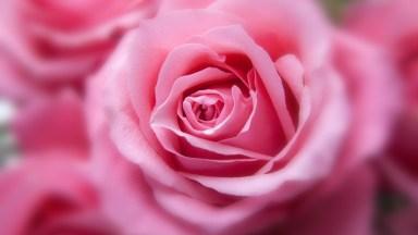 Mensagem De Bom Dia Com Amor - Uma Linda Mensagem Para Compartilhar!
