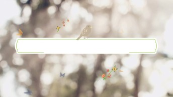 Mensagem De Bom Dia Com Borboletas E Flores, Muito Lindo!