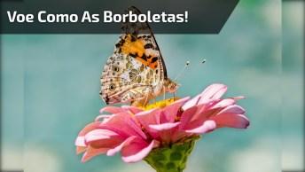 Mensagem De Bom Dia Com Borboletas, Seja Como Elas E Voe Para Luz!