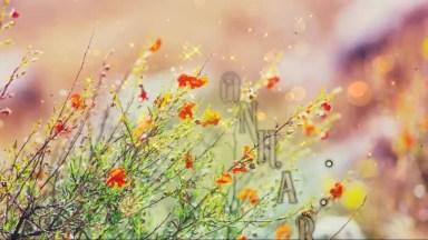 Mensagem De Bom Dia Com Frase De Esperança, Jamais Desista De Seus Sonhos!