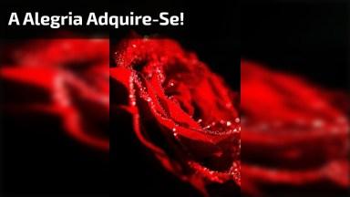 Mensagem De Bom Dia Com Imagens De Rosas! Espalhe Alegria Por Onde Passar!