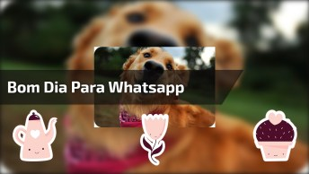 Mensagem De Bom Dia Divertida Para Whatsapp, Envie Para Pessoas Especiais!