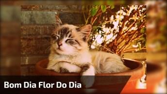 Mensagem De Bom Dia Flor Do Dia, Para Enviar As Amigas Do Whatsapp!