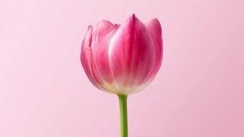 Mensagem De Bom Dia Mãe, Você É A Melhor Inspiração Que Eu Poderia Ter!