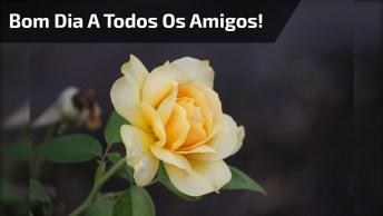 Mensagem De Bom Dia Para Amigos! Que Seu Dia Seja Repleto De Paz!