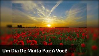 Mensagem De Bom Dia Para Deixar Você Em Paz, Tenha Um Lindo Dia!