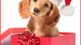 Mensagem De Bom Dia Para Manhã De Natal! Tenha Um Bom Dia!