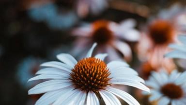 Mensagem De Bom Dia Quarta Feira Com Imagens De Flores