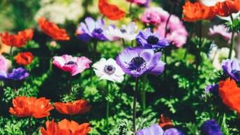 Mensagem De Bom Dia Quinta-Feira Com Flores! Viva A Cada Dia Intensamente!