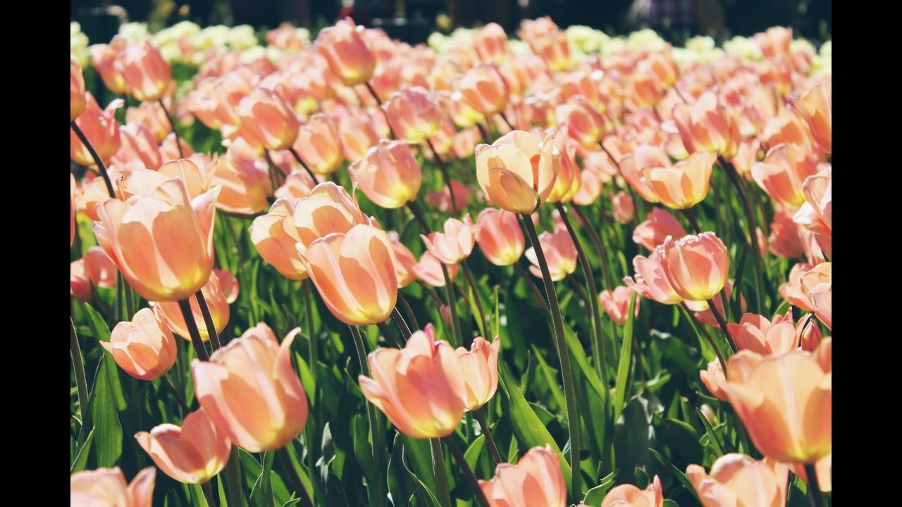 Mensagem de Bom Dia sábado com flores!
