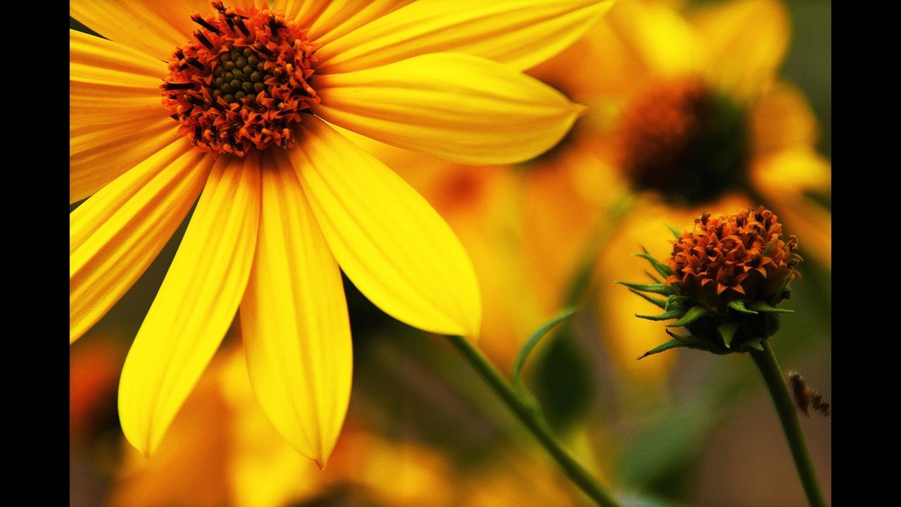 Mensagem de Bom Dia segunda-feira com flores