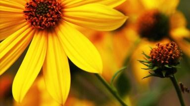 Mensagem De Bom Dia Segunda-Feira Com Flores! Tenha Uma Semana Abençoada!