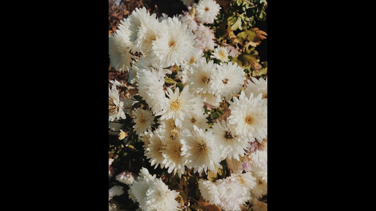 Mensagem de Bom Dia sexta-feira com flores!