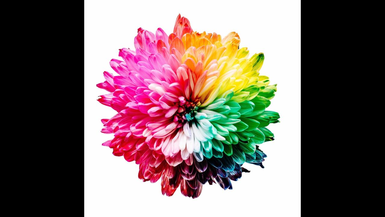Mensagem de Bom Dia terça-feira com flores