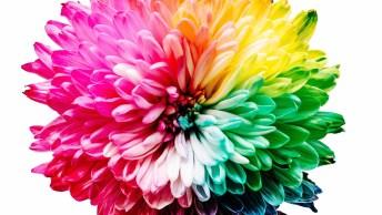 Mensagem De Bom Dia Terça-Feira Com Flores! Fé Para Começar Bem O Dia!