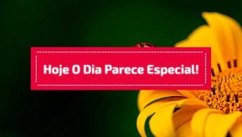 Telemensagem De Bom Dia Narrada Com Voz Feminina, Para Enviar Pelo Whatsapp!