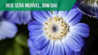 Um Caminho Suave Com O Aroma Das Flores, Bom Dia!