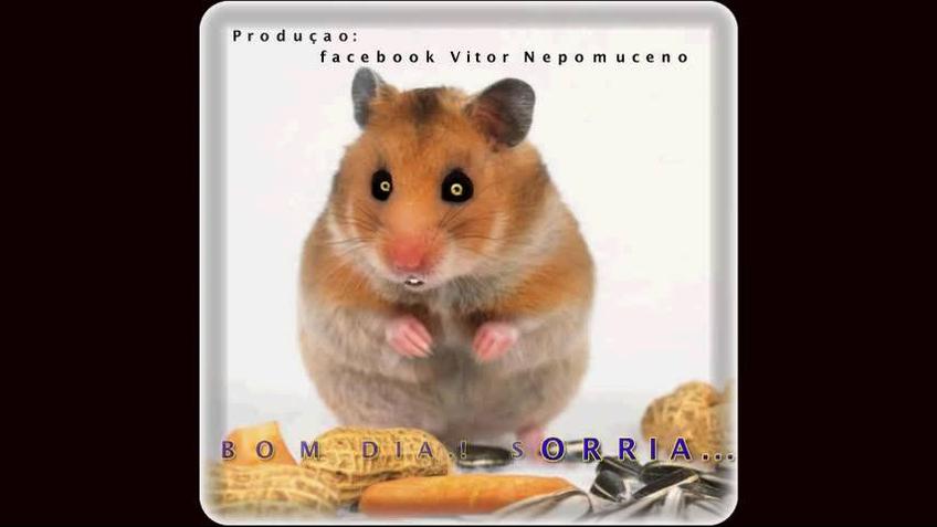 Vídeo com Bom Dia com ratinho e gargalhadas