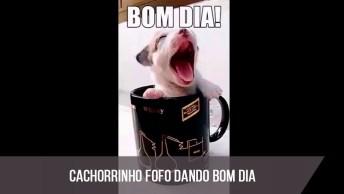 Vídeo Com Cachorrinho Fofo Dando Bom Dia A Todos Amigos E Amigas!