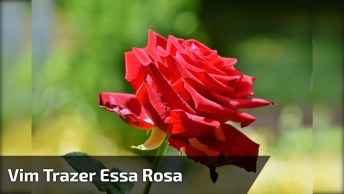 Vídeo Com Linda Mensagem De Bom Dia Para Enviar Para Seu Amor!