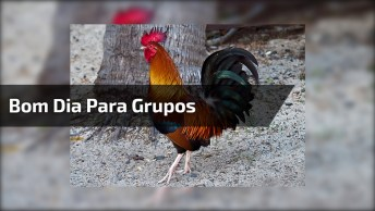 Vídeo Com Mensagem De Bom Dia Para Grupos Do Whatsapp, Confira!