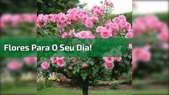 Vídeo De Bom Dia Com As Mais Lindas Flores Para Embelezar Seu Dia!