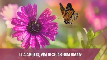 Vídeo De Bom Dia Com Flores E Borboletas, Perfeito Para Facebook!